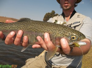 Best Trout Flies In South Africa