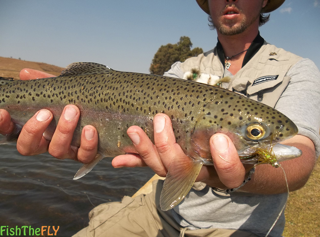 What flies to use for trout for Best fly fishing