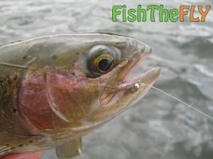Rainbow Fish The Fly