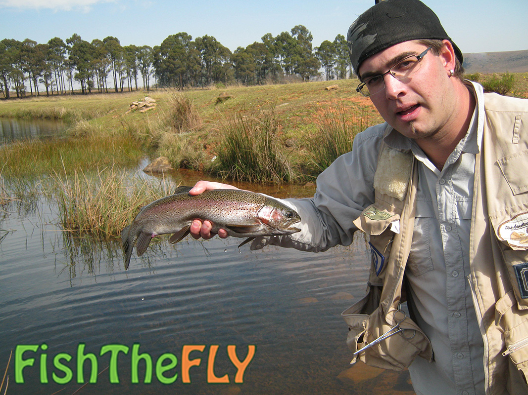 The history of trout fly fishing in south africa for Rainbow trout fishing