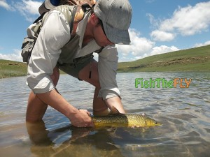 Releasing Smallmouth Yellowfish