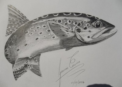 Brown Trout Sketch
