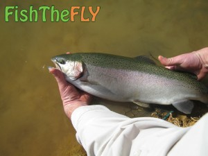 Emhlangeni Rainbow Trout