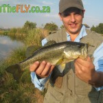 Largemouth Bass On Fly
