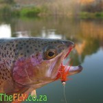 Millstream Trout Fishing