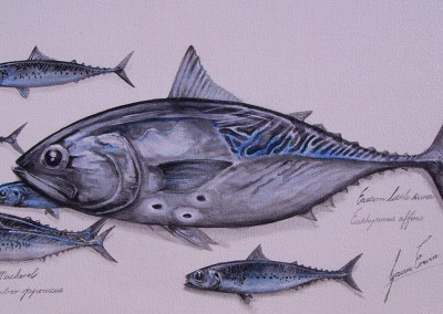 Bonito & Mackerel