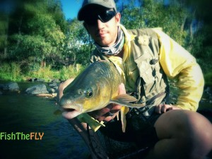 Golden Smallmouth Yellowfish