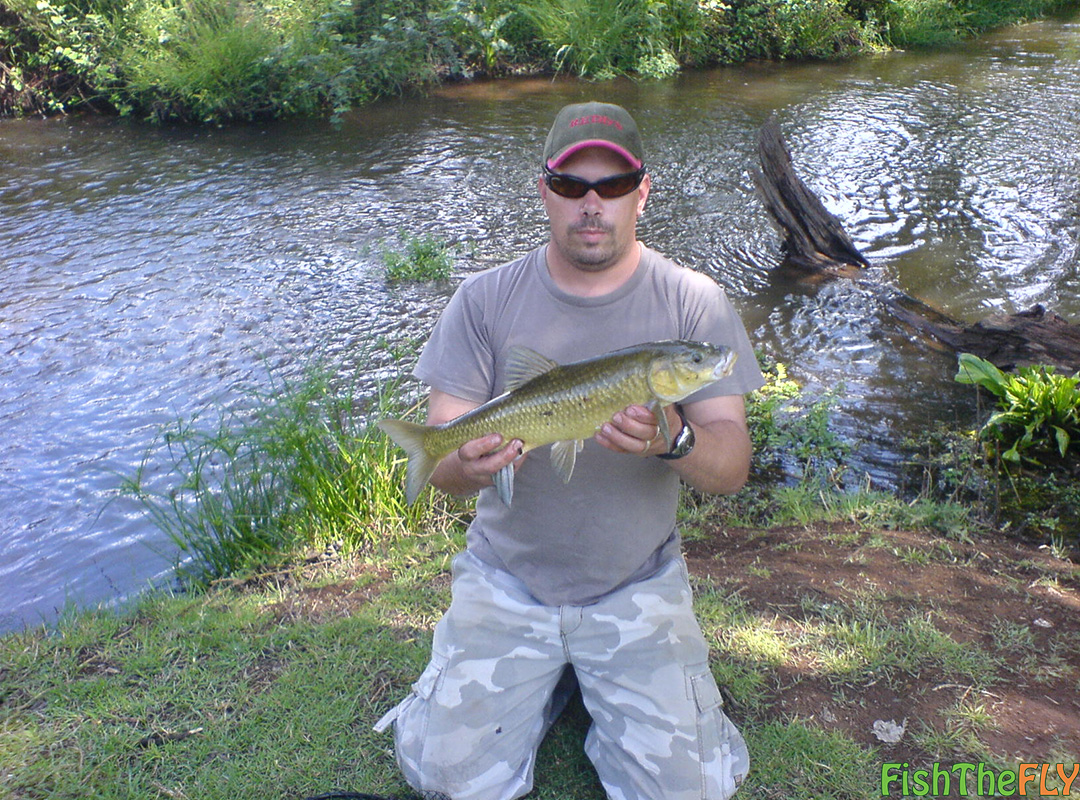 Yellowfish season in south africa fly fishing for yellows for Mlf fishing scale