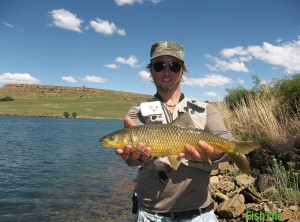 Sterkfontein Dam Smallmouth Yellowfish