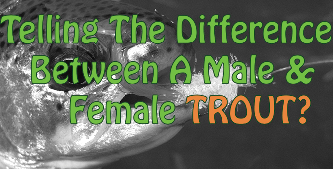 Difference Between Male And Female Trout
