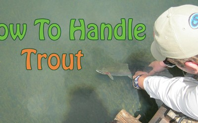 How To Handle Trout