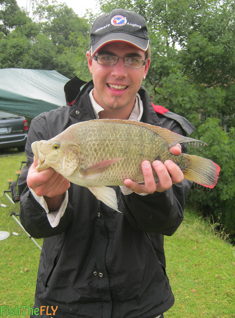 Blue kurper on fly fish the fly south africa for Fishing for tilapia