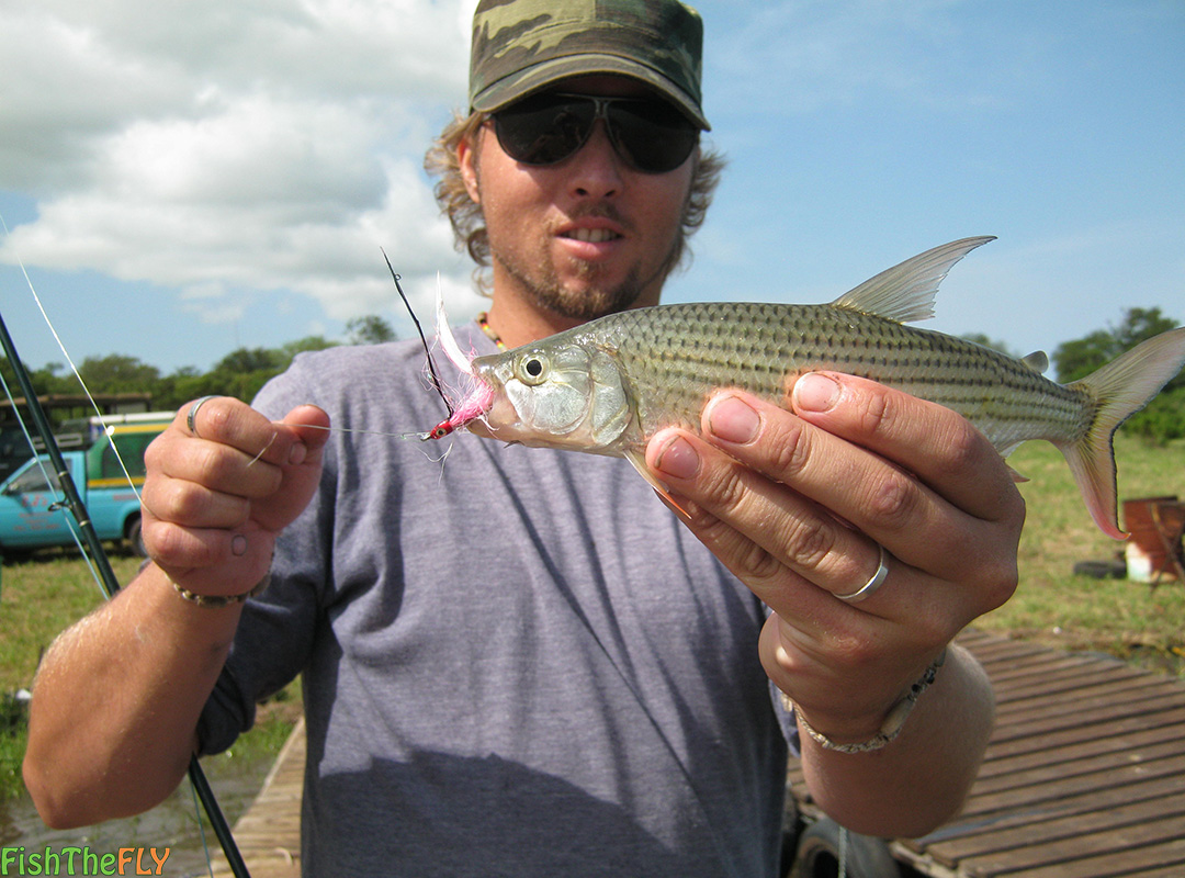 Fly fishing for tigerfish on fly in south africa for Tiger fish pictures