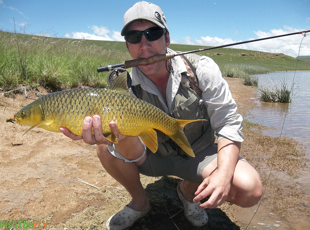 Smallmouth yellowfish on dry fly fish the fly south africa for Fishpond fly fishing