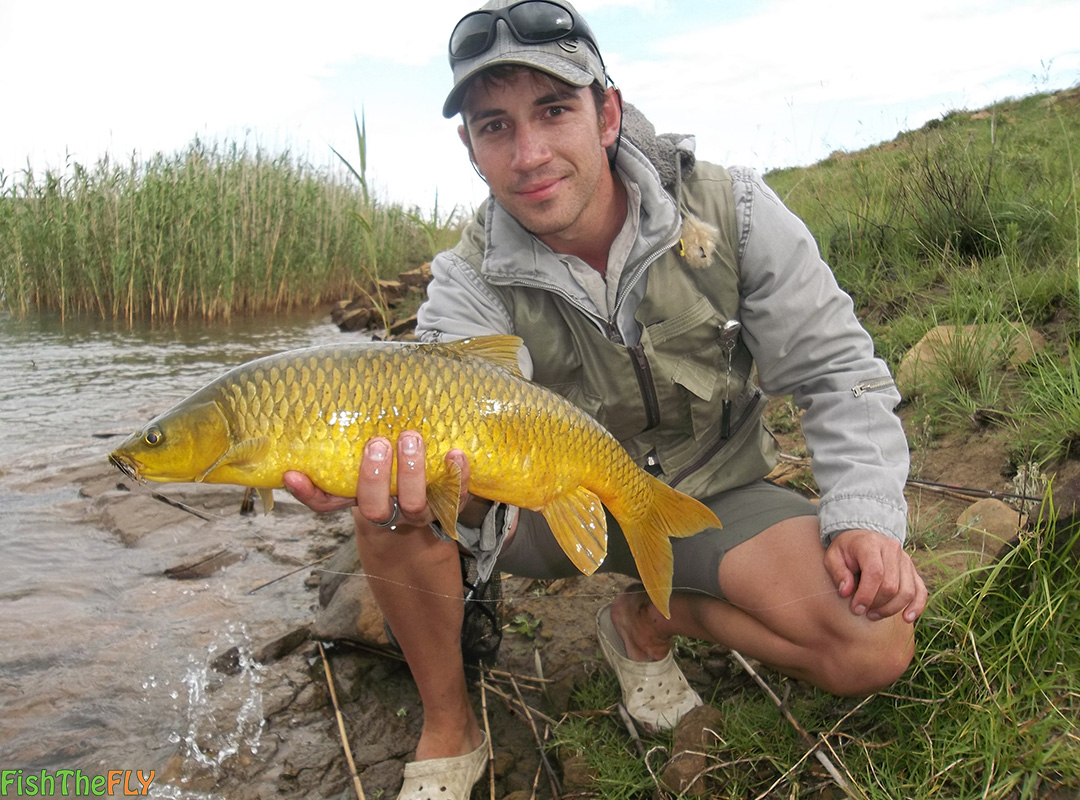 Fly fishing for the smallmouth yellowfish on fly for The fly fishing shop