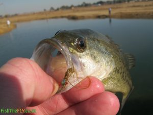 Emhlangeni Largemouth Bass