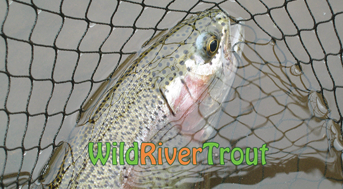 Wild River Eastern Cape Trout Fly Fishing