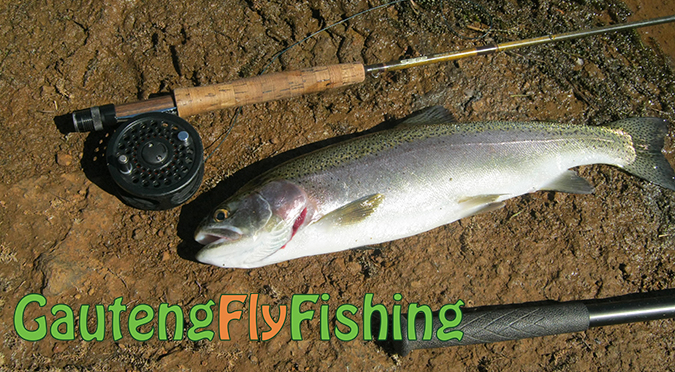 Gauteng Fly Fishing