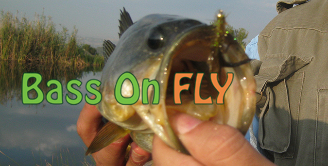 Gauteng Bass Fishing