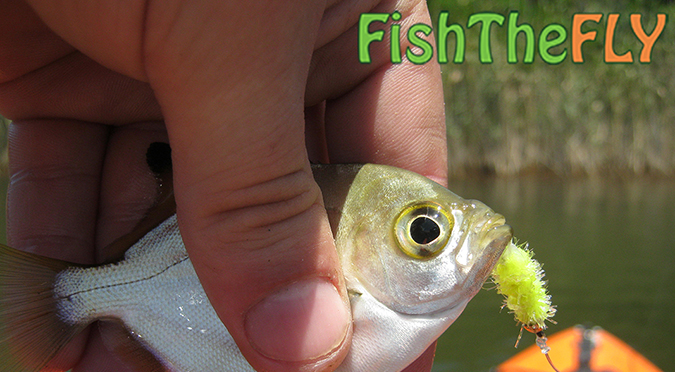 Fly Fishing The Eastern Cape