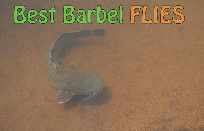 Best Barbel Flies