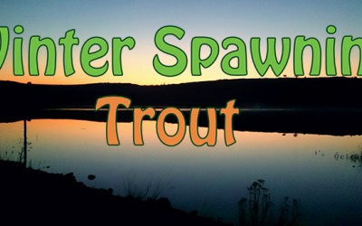 How To Catch Spawning Trout