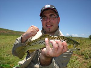Brown Trout caught at Millstream
