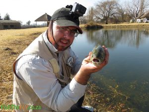 Rainbow Trout Caught at Emhlangeni